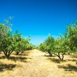 depositphotos_14964545-stock-photo-olive-trees-at-greece-country