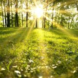 depositphotos_21692487-stock-photo-sunlight-in-the-green-forest