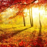 depositphotos_20364109-stock-photo-autumnal-park-autumn-trees-and