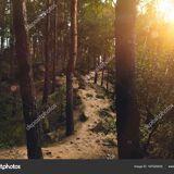 depositphotos_167020930-stock-photo-footpath-in-forest-at-sunset