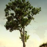 depositphotos_1597077-stock-photo-old-tree