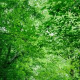 depositphotos_210465946-stock-photo-low-angle-view-green-trees