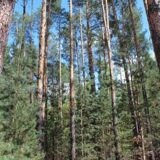 depositphotos_260711124-stock-photo-summer-landscape-green-forest-pines