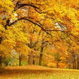 depositphotos_11782835-stock-photo-autumn-gold-trees-in-a